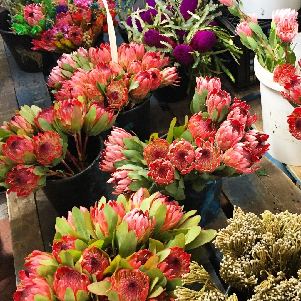 Proteas, the official flower of South Africa