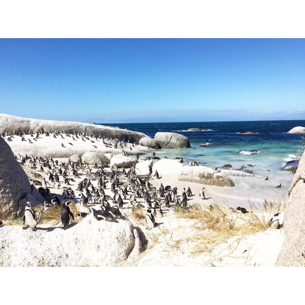 Cape Town 43