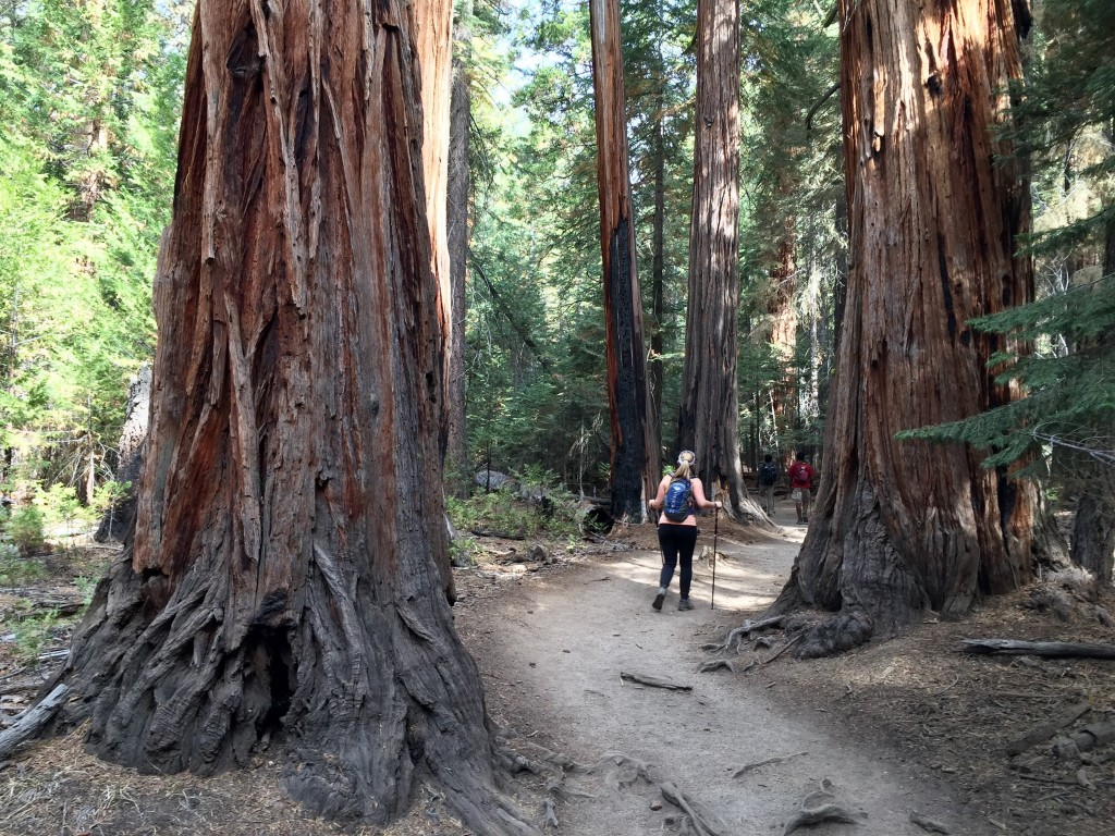 I was pretending the huge trees were Ents, and these aren't even Sequoias!