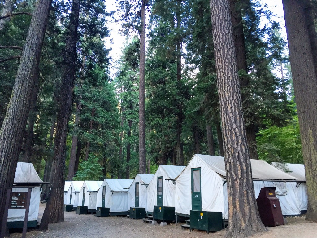 We stayed in a Tented Cabin at Curry Village, complete with Bear Boxes (those green boxes outside each tent). You must store all food and anything with a fragrance locked up in the box so bears don't destroy your tent looking for snacks.