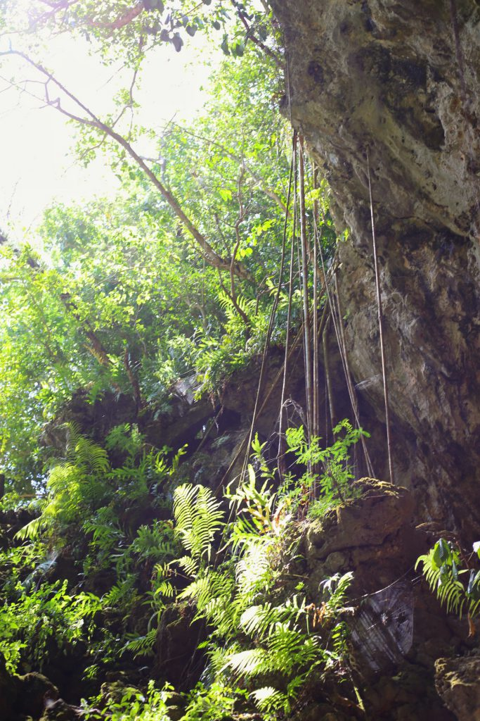 The dirt road ends about 2 min later, at the opening of this cave. Yes, spiders galore.
