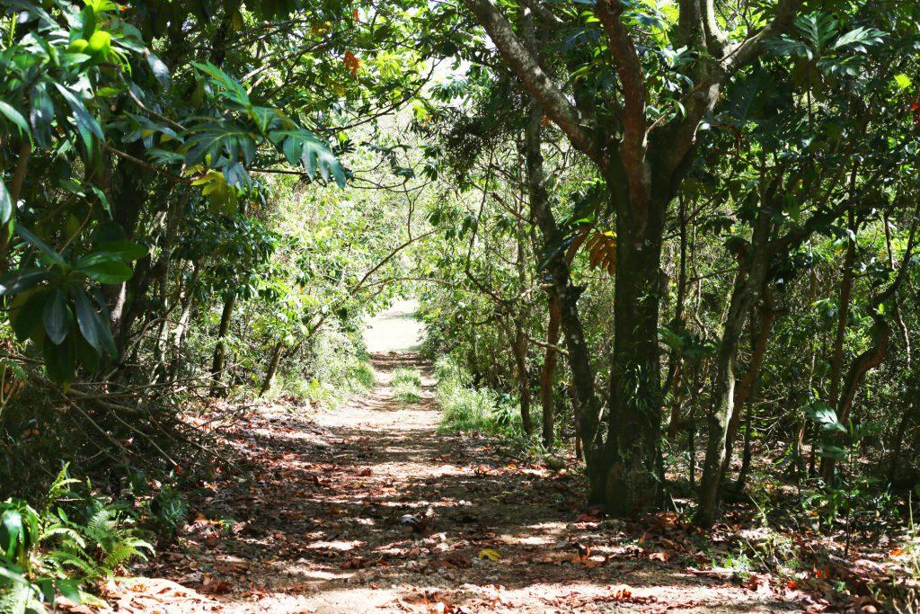 Blog- Guam 6